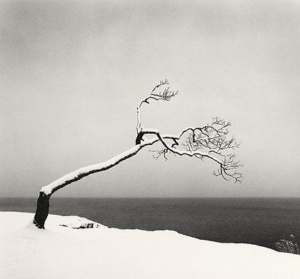 """Michael Kenna Kussharo """"Lake Tree, study 2"""""""